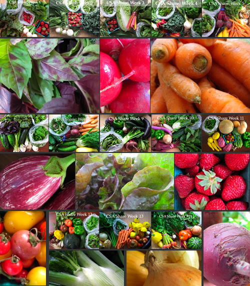 Vegetables are my favorite thing to photograph