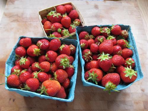 Finger Lakes Fruit Bowl Share: 07.02.09