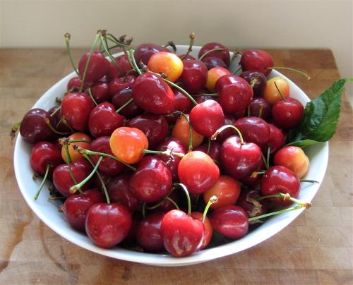 Finger Lakes Fruit Bowl Share: 07.09.2009