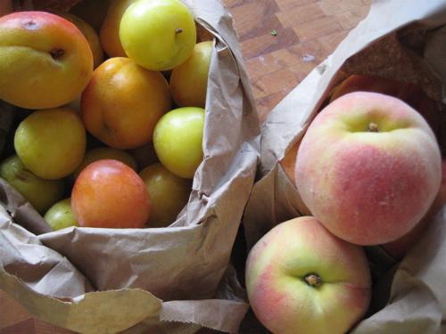 Finger Lakes Fruit Bowl Share, 06. Aug.09
