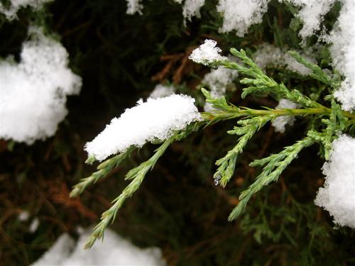 2009_oct_snowfall_1