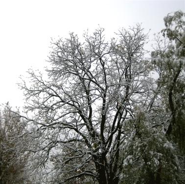 2009_oct_snowfall_2