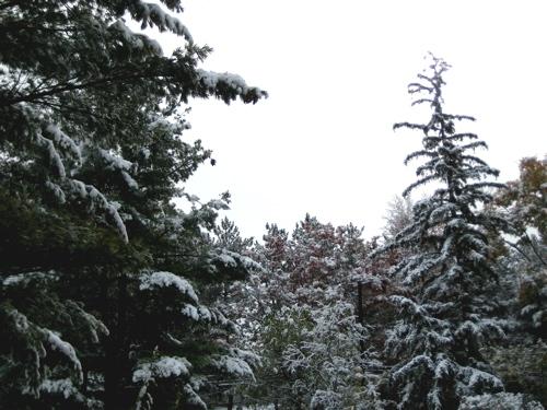 2009_oct_snowfall_3
