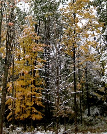 2009_oct_snowfall_5